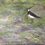 Lapwing, 2016 Oil on canvas (84 x 59cm).jpg