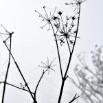 Seedheads 4